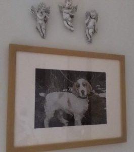 cross stich picture of cocker spaniel