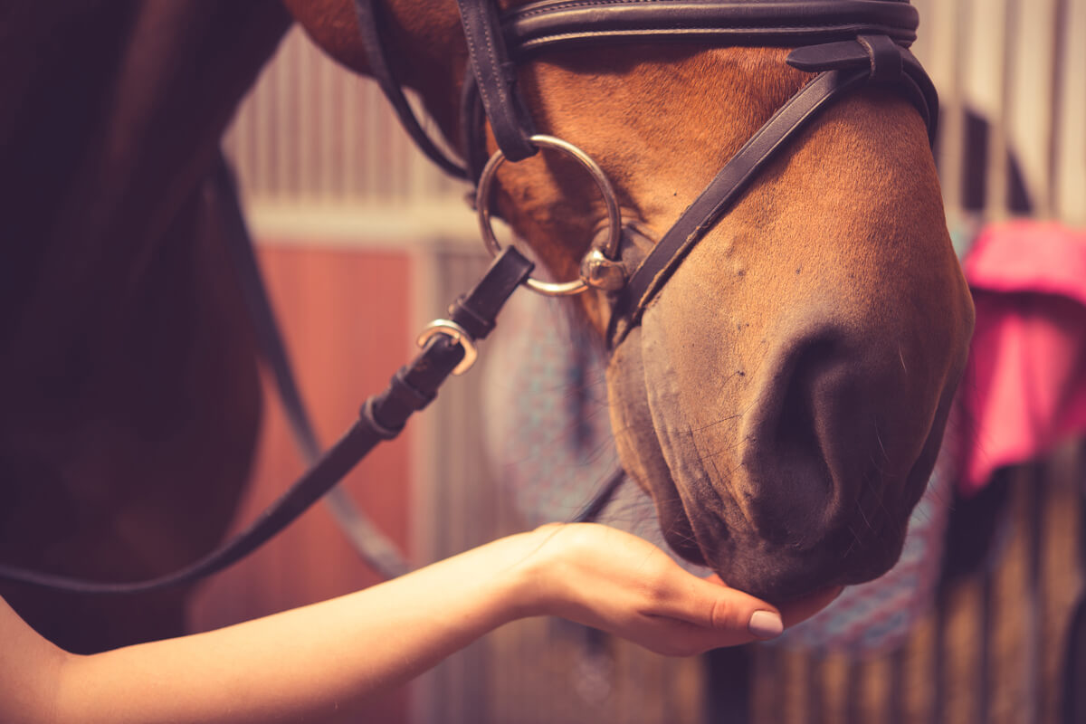 horse nuzzles womans hand covid 19 equine rescues emergency fund