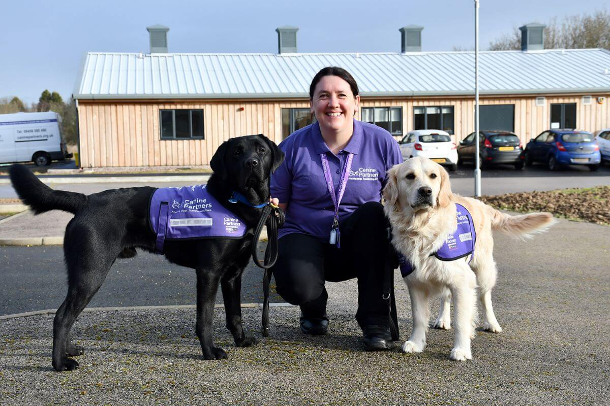 Advanced Trainer_Gemma_with golden and black labradors assistance dogs canine partners