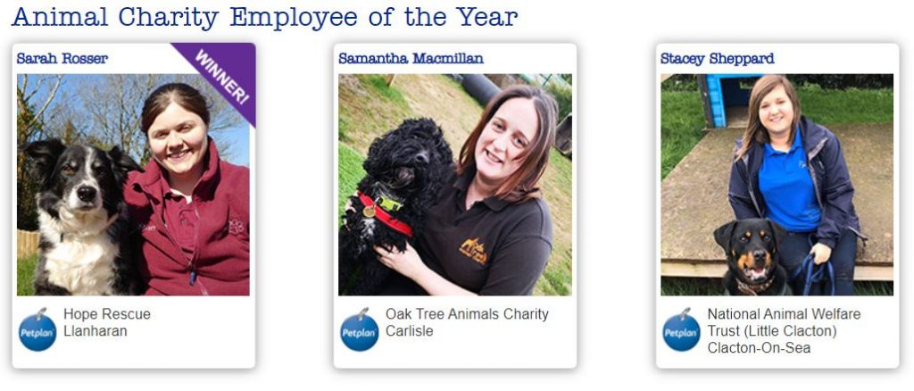 petplan animal charity awards employee finalists