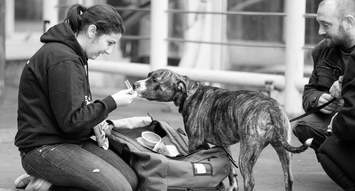 Streetvet dog-friendly hostel accreditation for homeless people with pets