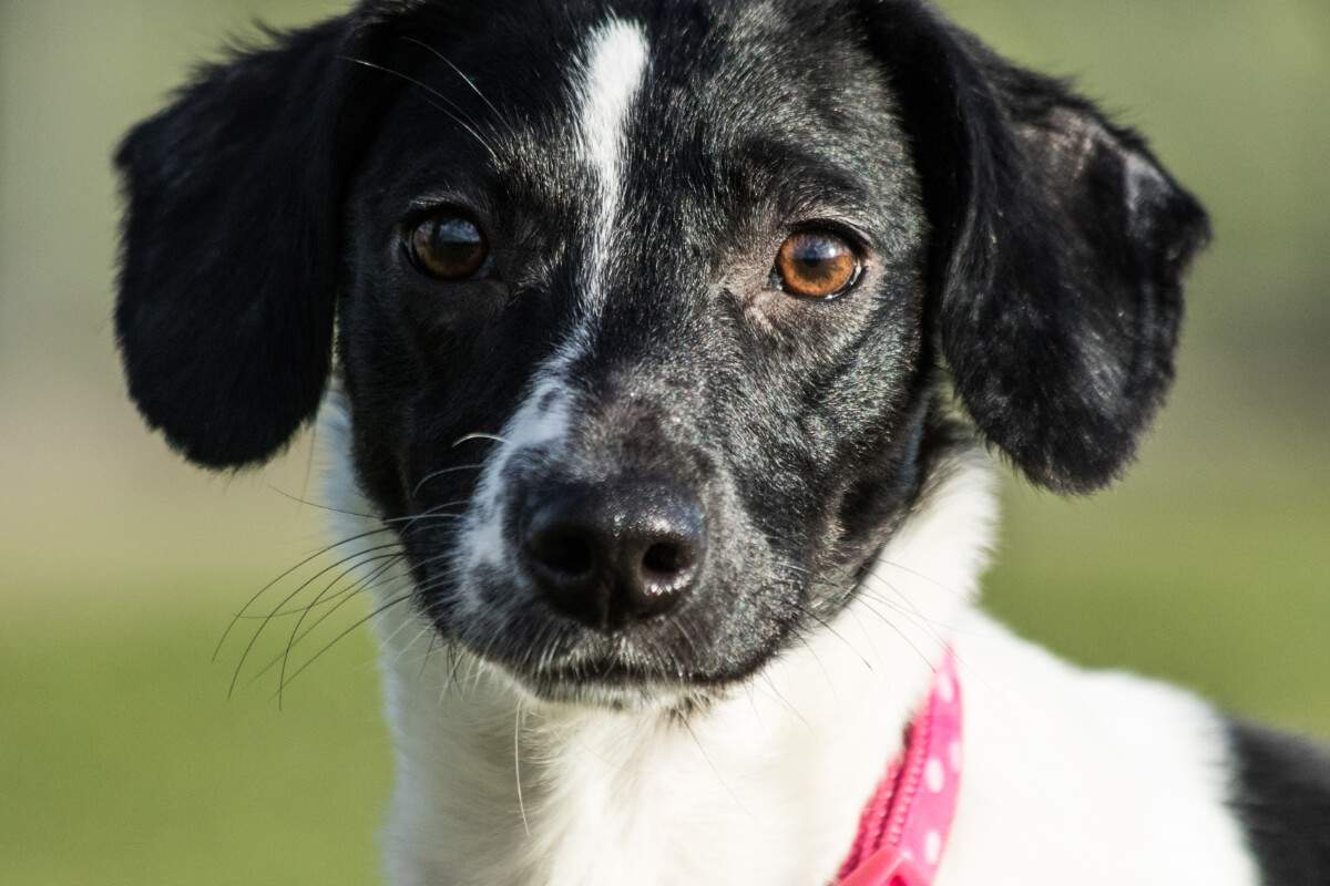 black and white dog sparkle at stokenchurch dog rescue