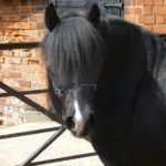black horse by stable at remus sanctuary