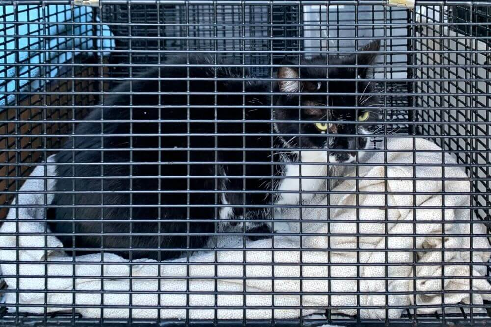 black and white resting in Blue Cross ambulance cage
