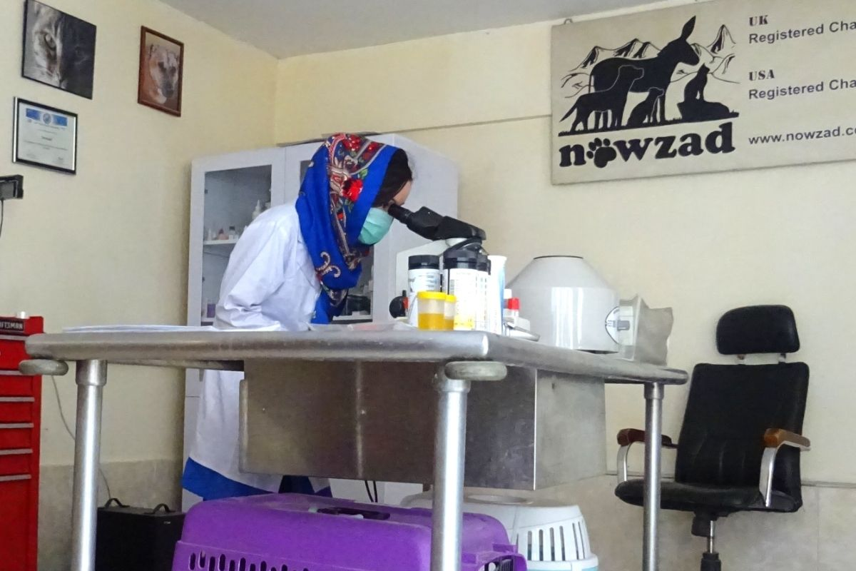 female vet looks through microscope at nowzad animal charity afghanistan