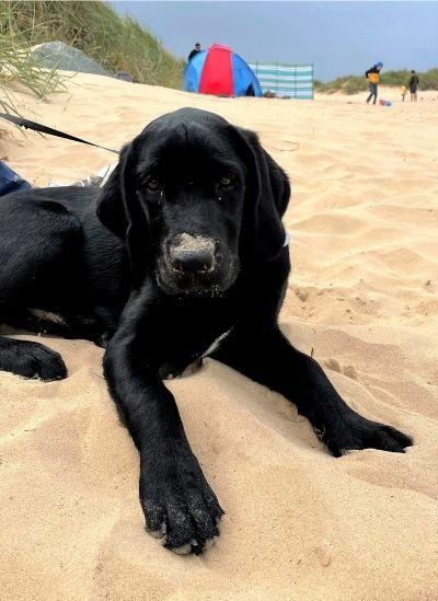 juno enjoys dog ice cream at the beach
