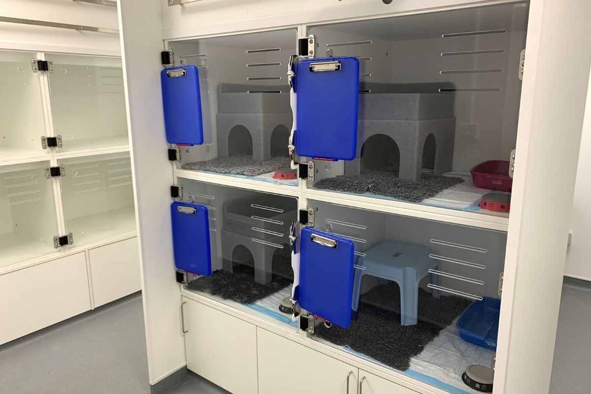 royal veterinary college reburshed cat ward funded by PPCT